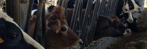 FERRERO: Viaggio alla scoperta del latte #70anniFerrero