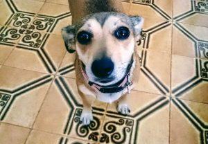 fragola-cane-mammafelice
